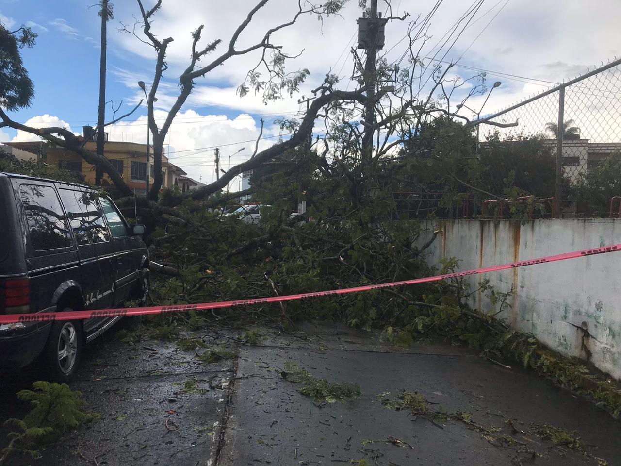 Intensa lluvia provocó inundaciones y la caída de un árbol, en Xalapa