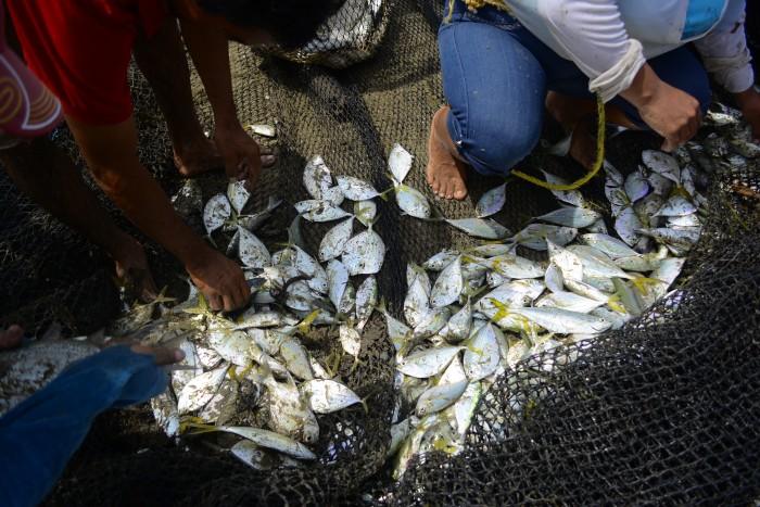 A pesar de la contaminación, continúa la captura de especies en el río Coatzacoalcos