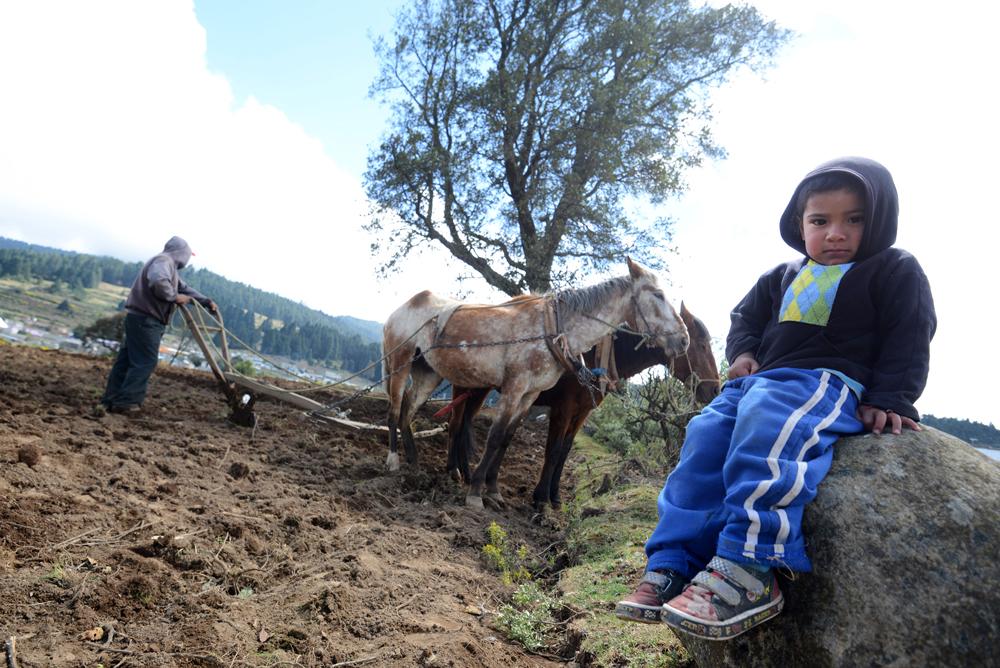 En crisis productores del Valle de Perote