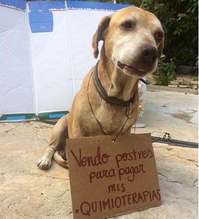 Vendiendo postres buscan a salvar a perro con Cáncer