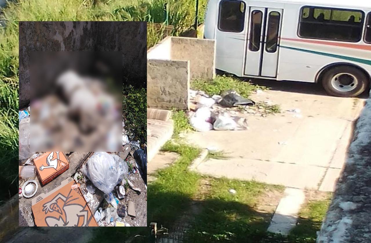 Dejan a perro muerto en basurero de colonia de Coatza
