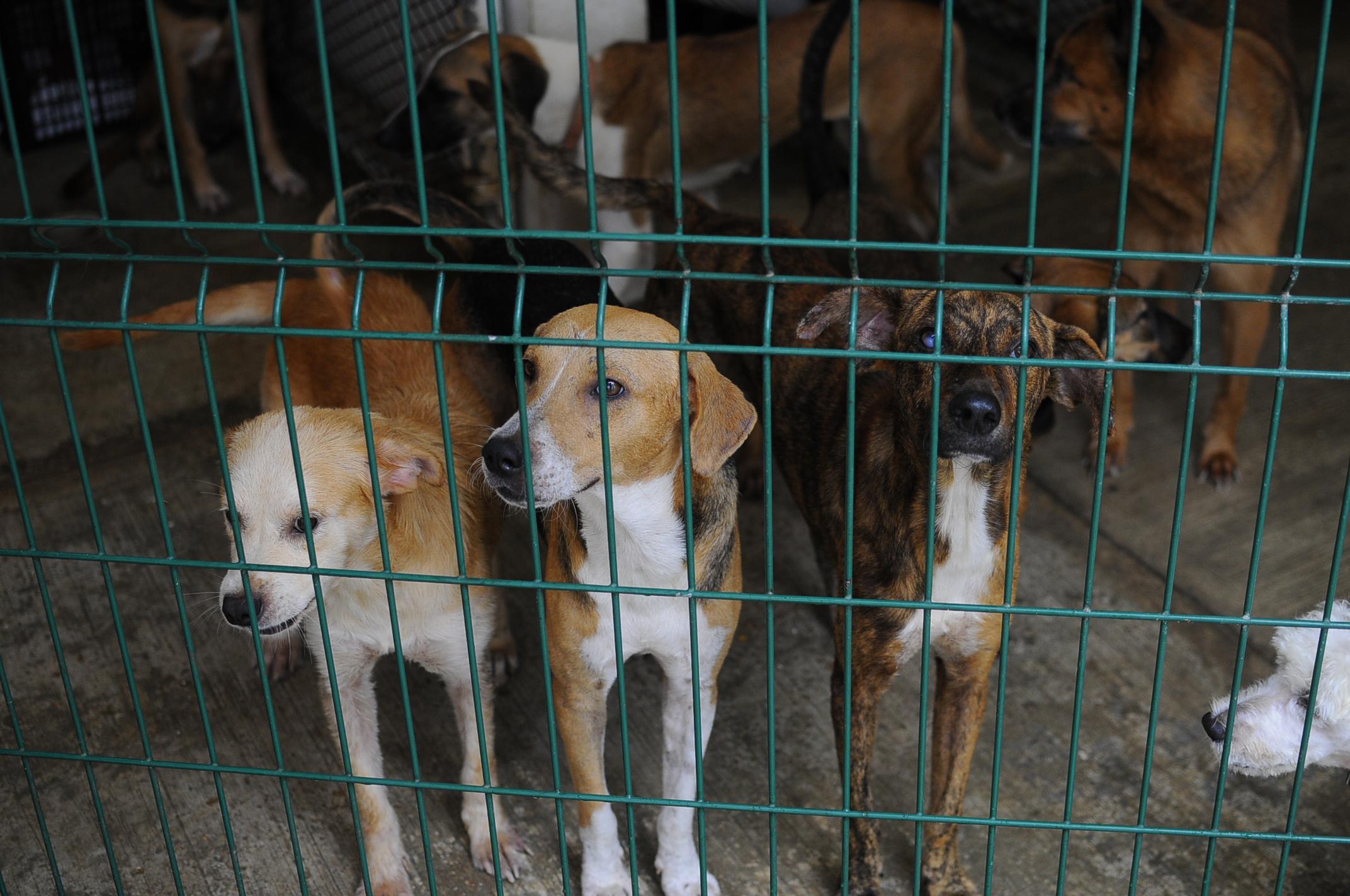Saturado el centro de control animal de Coatzacoalcos: Amedea