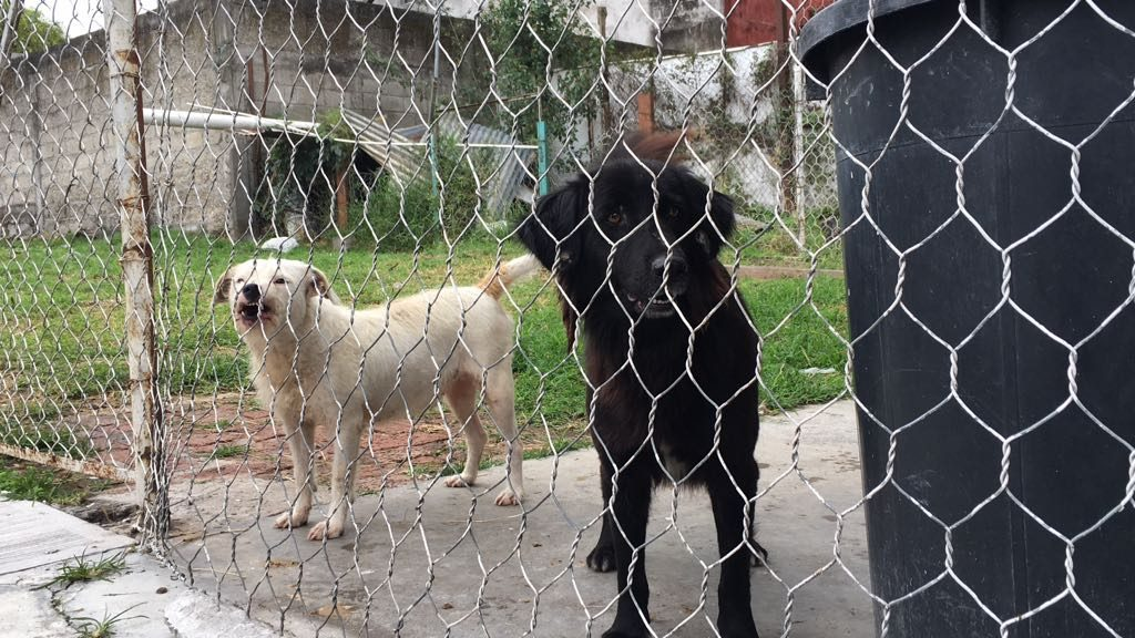 Denuncian animalistas redadas y desaparición de perros en Perote