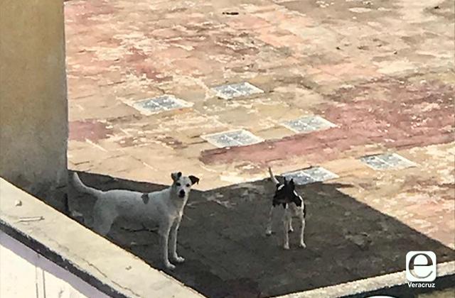 Denuncian abandono de perros en azotea de Xalapa
