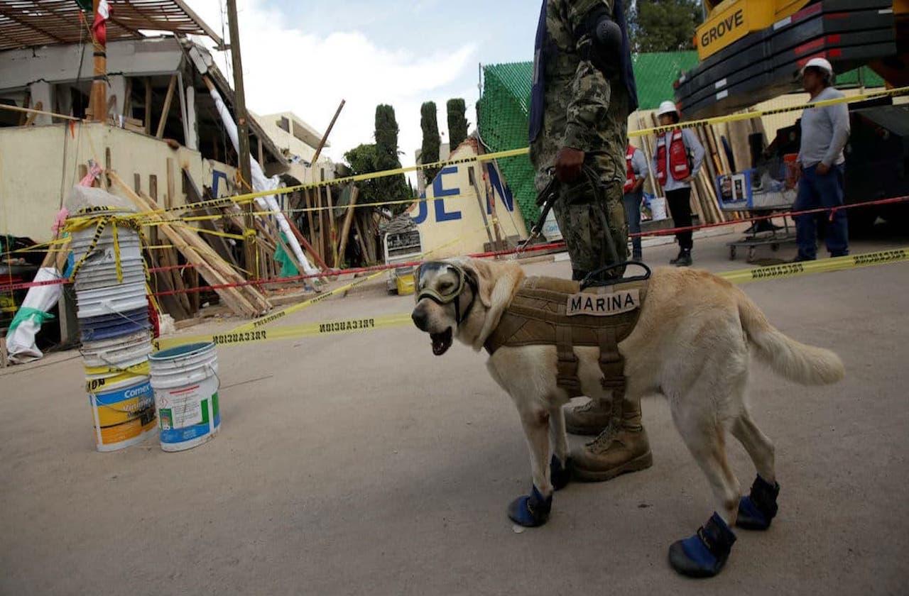 Perros rescatistas, los otros héroes de los terremotos en México