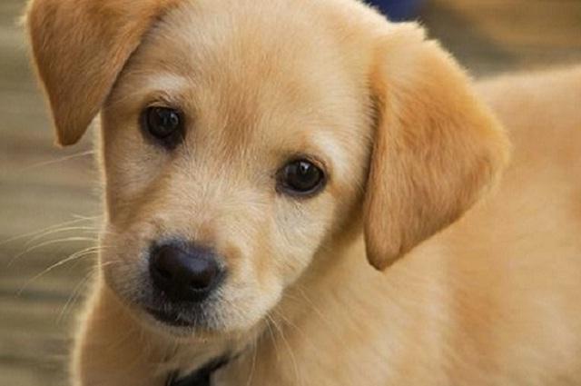 ¡Cuida a tus perritos de estas enfermedades!