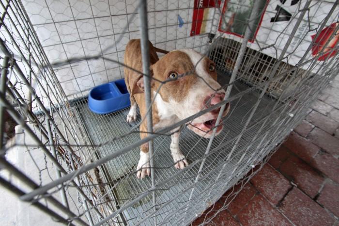 Van 12 denuncias por maltrato animal, en Veracruz Puerto