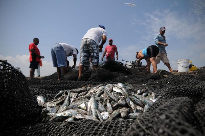 Prevén pescadores mortandad de especies marinas por trabajos de Pemex