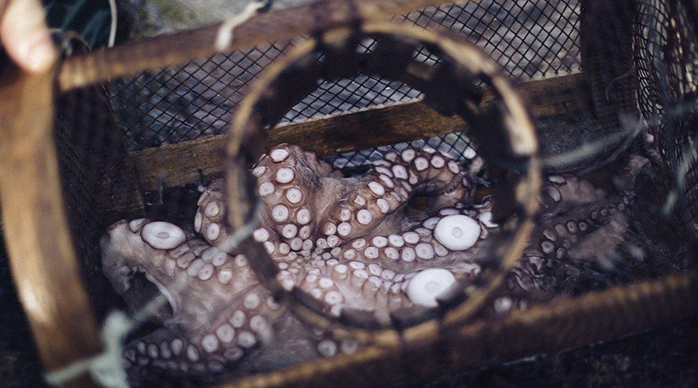 Veda de pulpo y contaminación limitan a pescadores