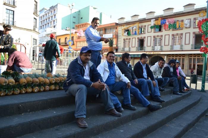 Desaparecen 45 mdp destinados a productores de piña