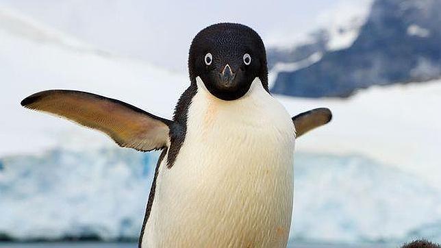 Espera Acuario superar visitas con 'Pingüinario'