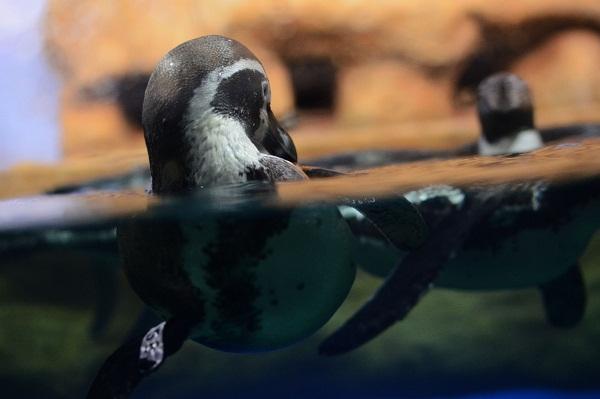 Inauguran pingüinario en Veracruz