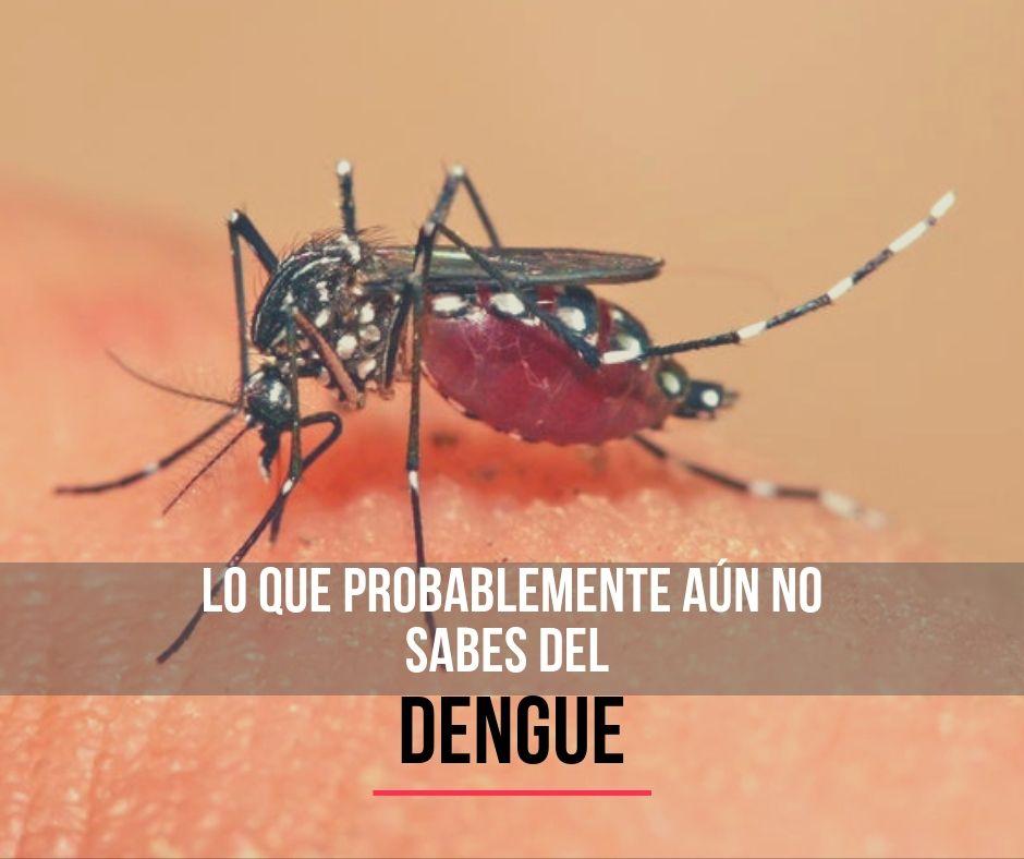 Ocho datos sobre el dengue que probablemente no sabías