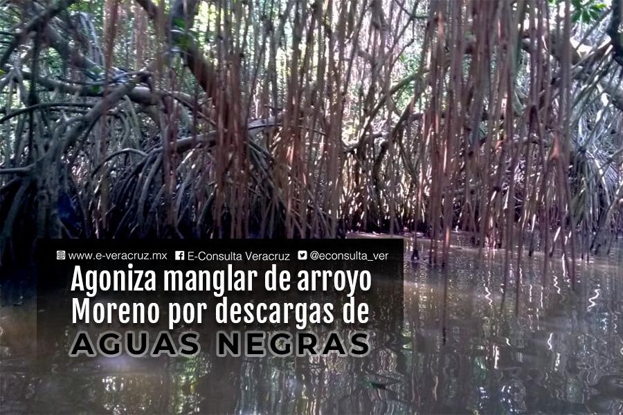 Agoniza el manglar de Boca del Río por descargas de aguas negras