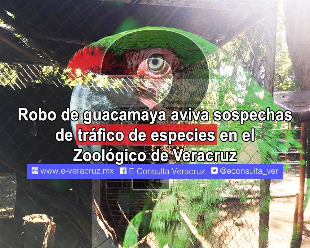 Robo de guacamaya en el zoológico de Veracruz ventila mercado negro de especies