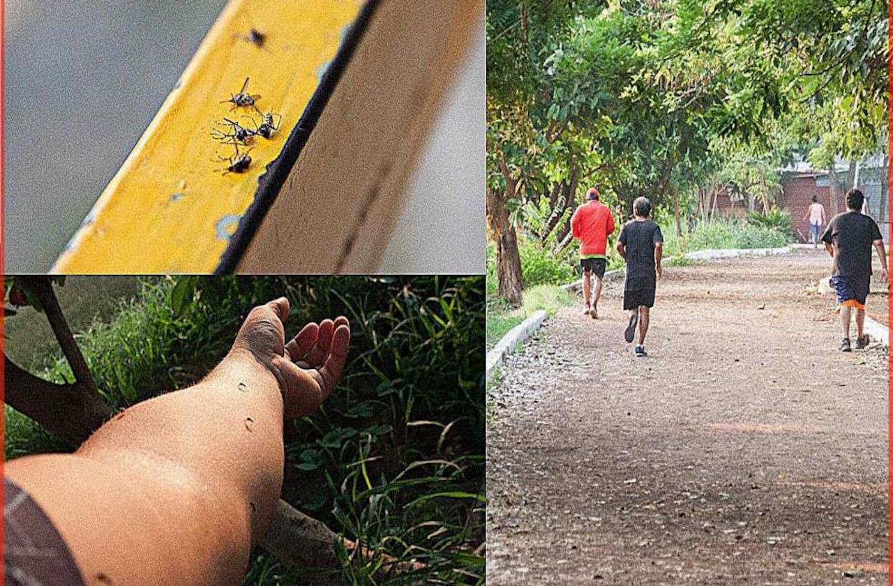 Jarochos privilegian ejercicio a contagios de covid y dengue