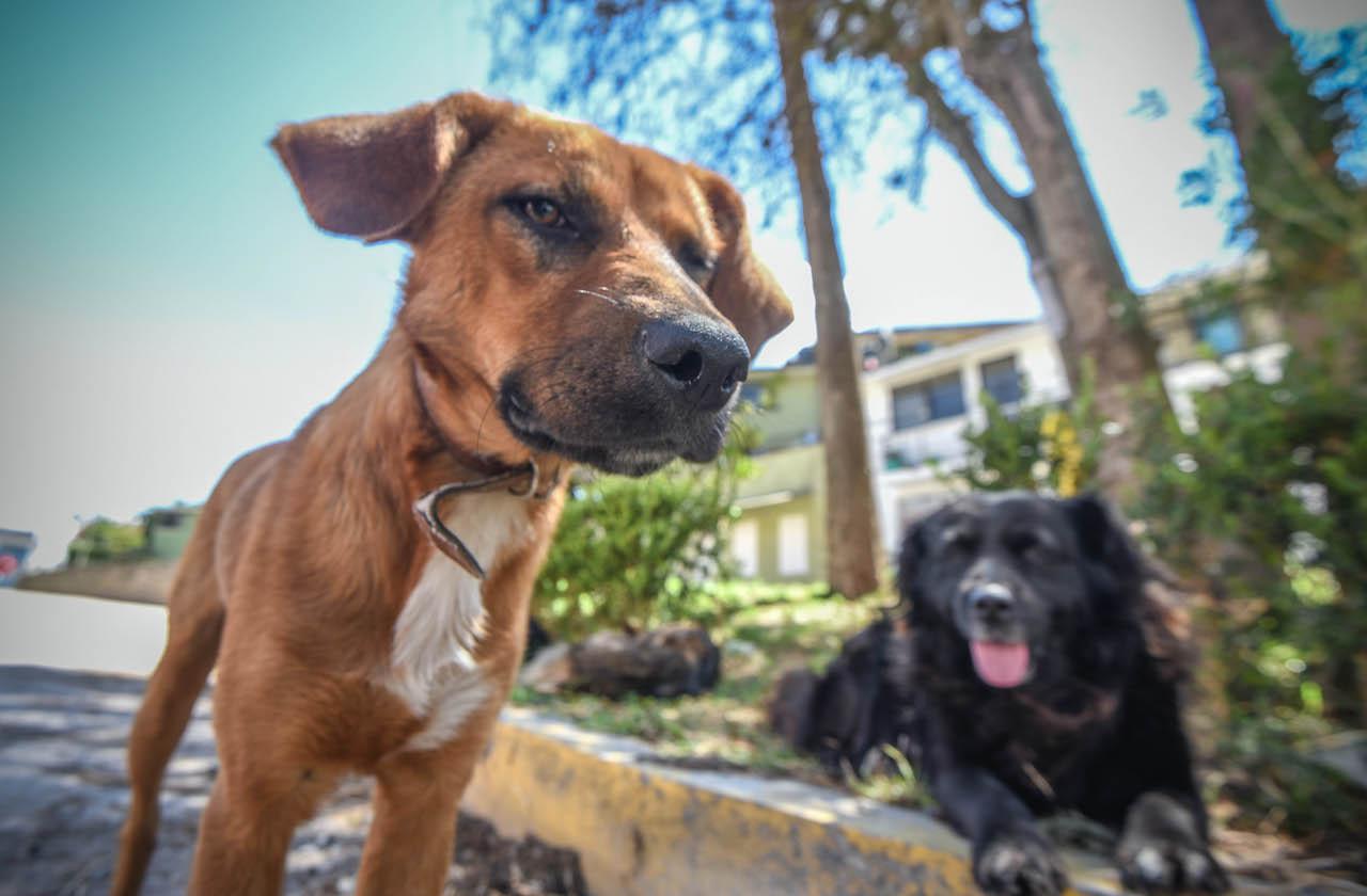 Promueven campaña de esterilización canina y felina en Xalapa