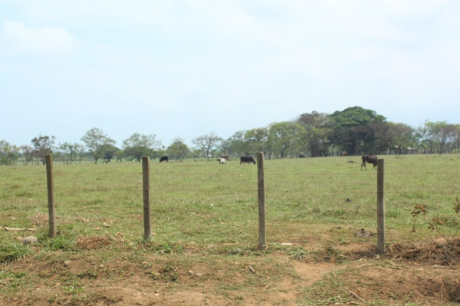 Dependencias del campo, obstáculo de la verdadera población