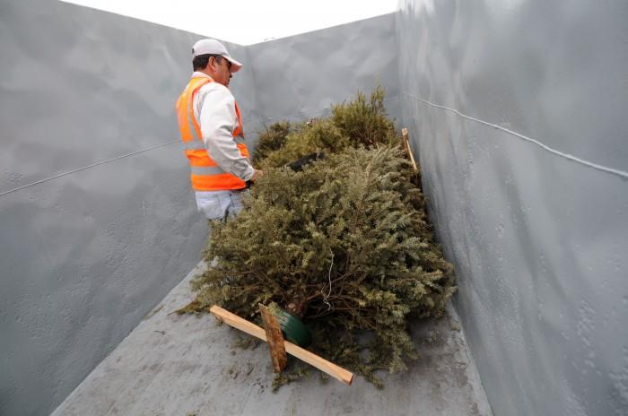 Inicia reciclaje de árboles navideños en el Puerto de Veracruz