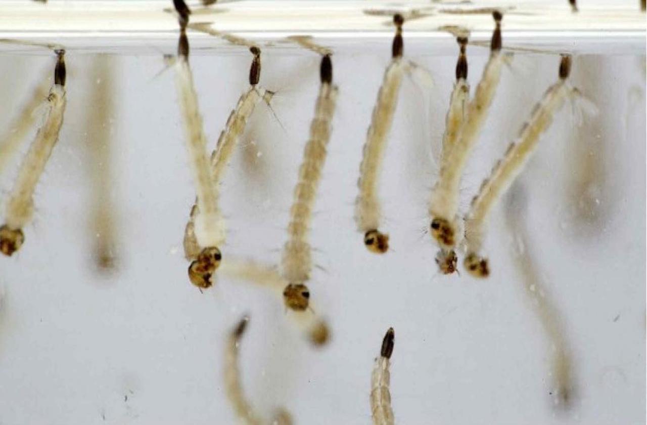 Reportan primeros casos de dengue en Coatzacoalcos