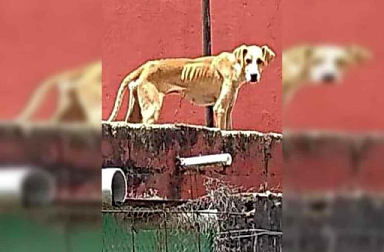 Rescatan a mascota abandonada en azotea, en Xalapa