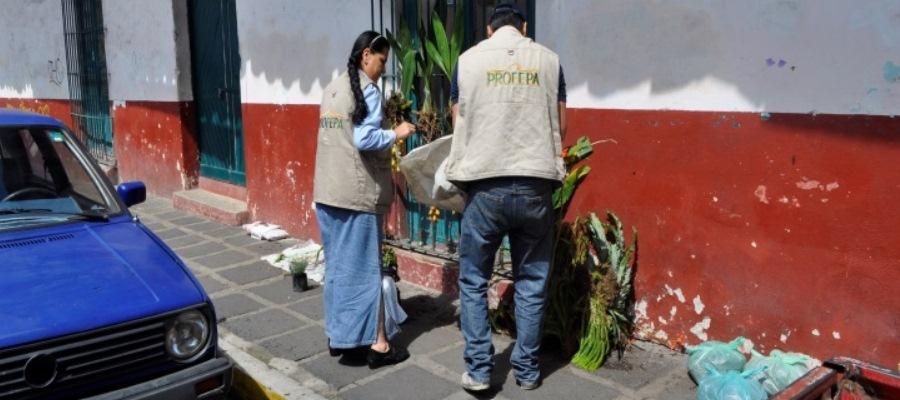 Profepa asegura 457 ejemplares de orquídeas en Veracruz