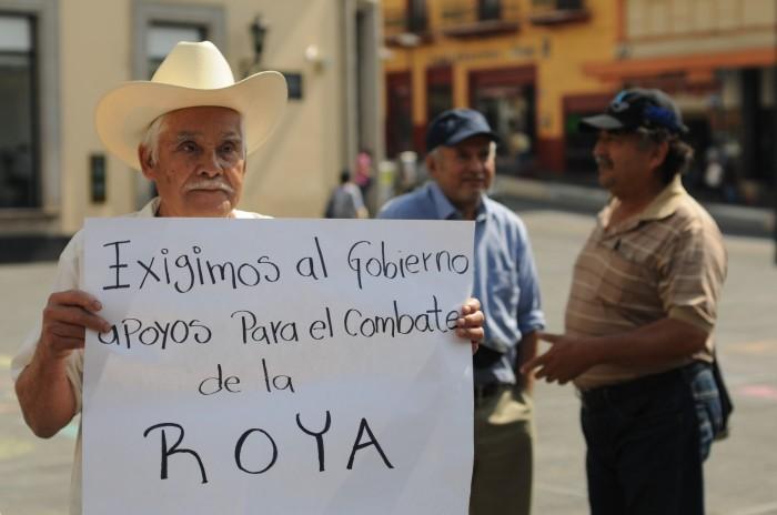 Cafeticultores exigen a Gobierno apoyos para combatir roya