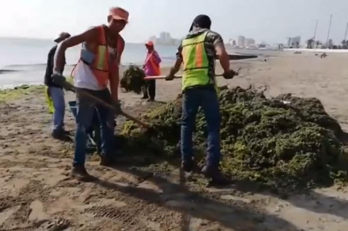 Sargazo llega nuevamente a playas de Veracruz