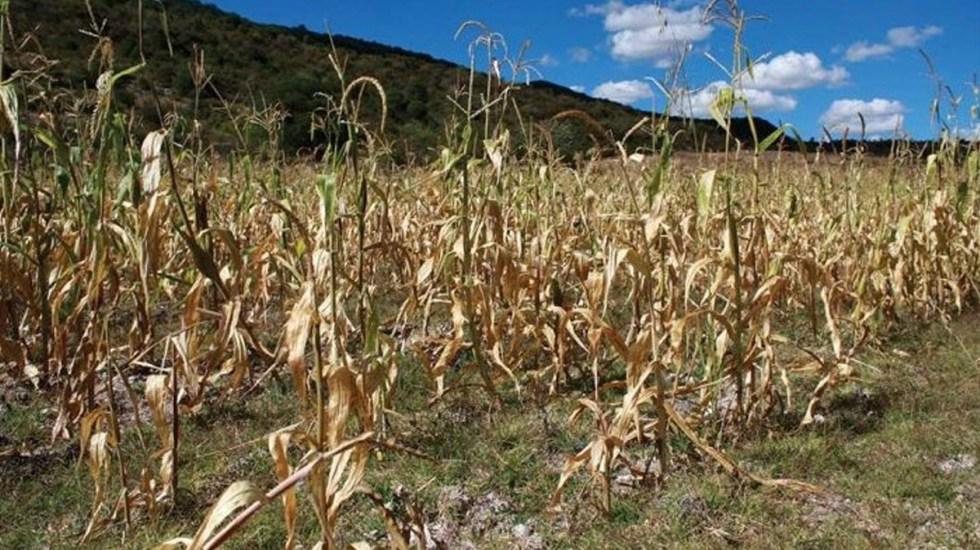 Entregarán apoyos a productores ganaderos afectados por la sequía