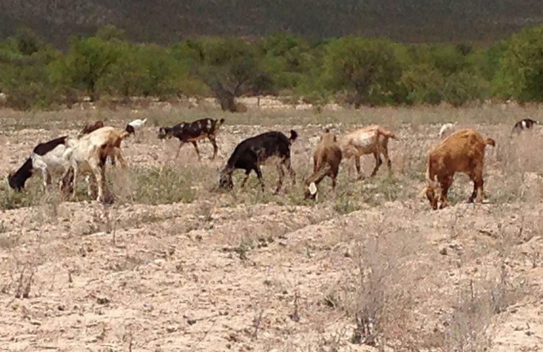 40.6 por ciento del territorio veracruzano presenta sequía extrema