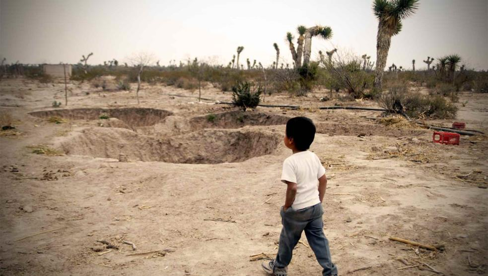 Confirman graves pérdidas en cultivos de arroz y limón por sequía en Veracruz