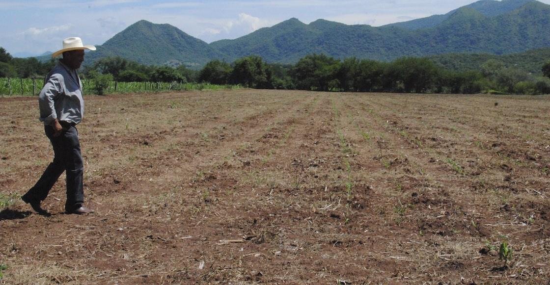 Aseguradora Proagro pagó 69.3 mdp a SEDARPA por sequía en Veracruz