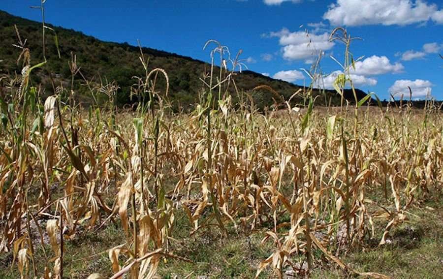 Sequía 'irreparable' para cinco municipios de Veracruz