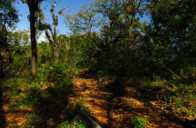 También zona serrana de Minatitlán cerró sus accesos, nadie entra ni sale
