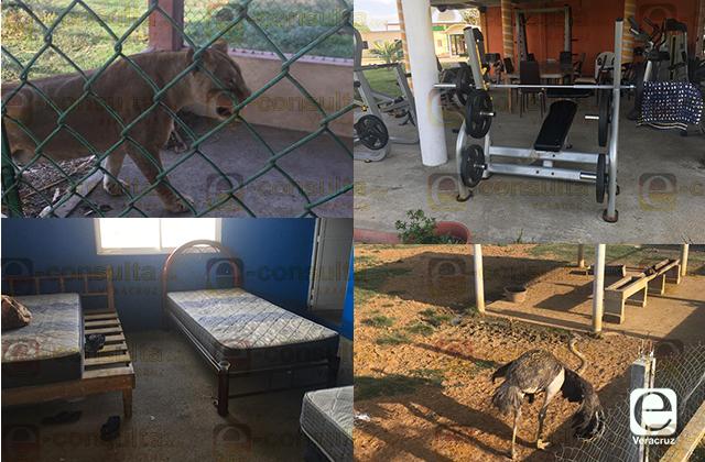 Hallan presunto campo de adiestramiento al sur de Veracruz con leones y cocodrilos