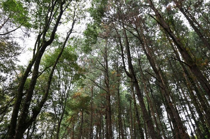 Ayuntamientos dan cambios de uso de suelo sin consultar a Sedema