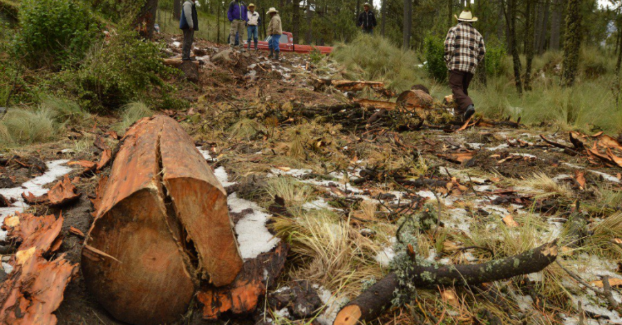 Veracruz, uno de los estados con más tala clandestina: SEMARNAT