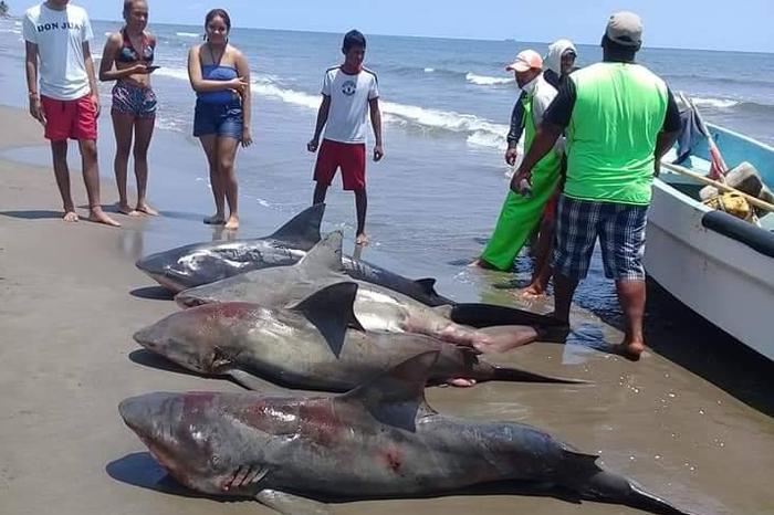 Polémica en redes sociales por pesca de tiburones en Alvarado