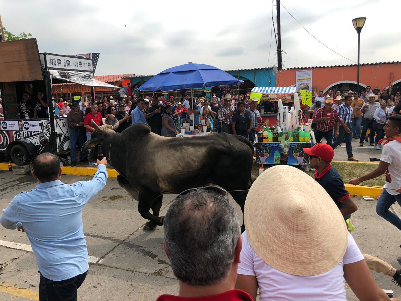 Ignoran a animalistas y sueltan toros en Tlacotalpan