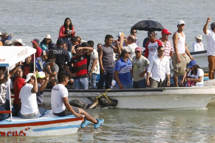 Activistas piden a Yunes frenar embalse de toros en Tlacotalpan