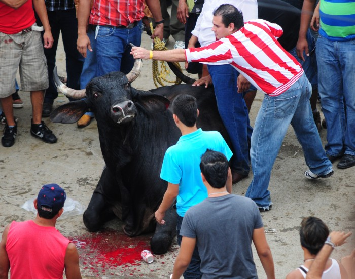 Fiscalía quiere amedrentar a tlacotalpeños por suelta de toros: Alcalde