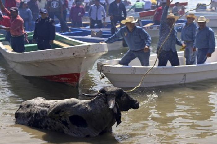 Fiscalía reitera prohibición de embalse de toros en Tlacotalpan