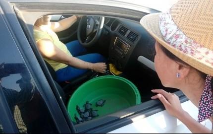 Empleada de Profepa huye con tortugas lora para liberarlas sólo con su familia