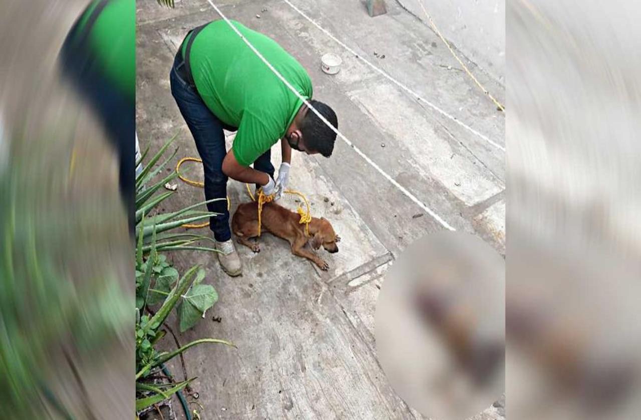 Tras ser abandonado, perro devoró a otro en Río Medio