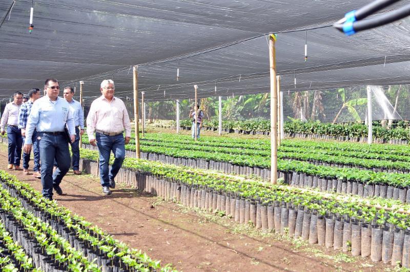 Los cafeticultores veracruzanos contarán con el apoyo del Gobernador Yunes: Sedarpa