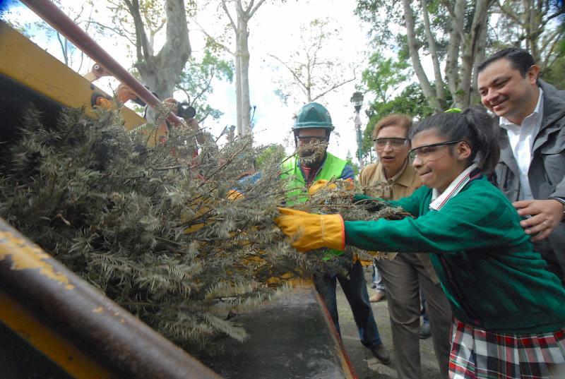 Inicia SEDEMA la campaña de acopio de pinos Recicla tu Navidad en 41 municipios