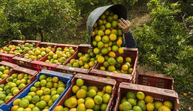 Amarran a trabajadores y privan de la libertad a citricultor, en Martínez