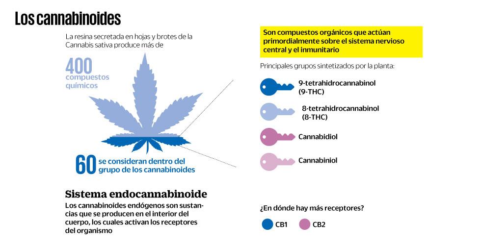 Derivados de la marihuana se abren paso como nuevos medicamentos