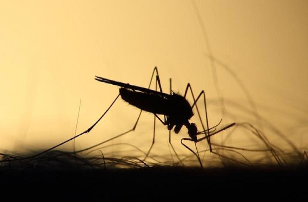 Veracruz, con menos defunciones por dengue en 2020