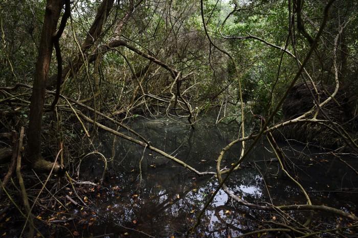 Se pierde 50% del manglar de Arroyo Moreno: PVEM